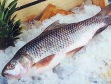 לקנות דגים