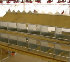 A Frame Chicken Layer Breeding Cage