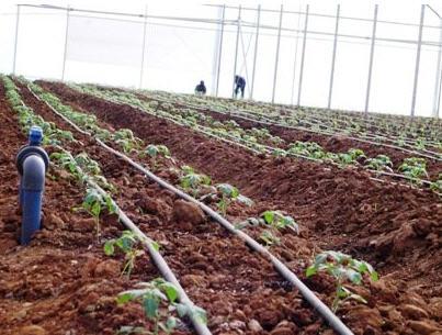 לקנות Drip irrigation
