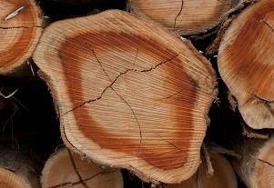 לקנות בולי עץ
