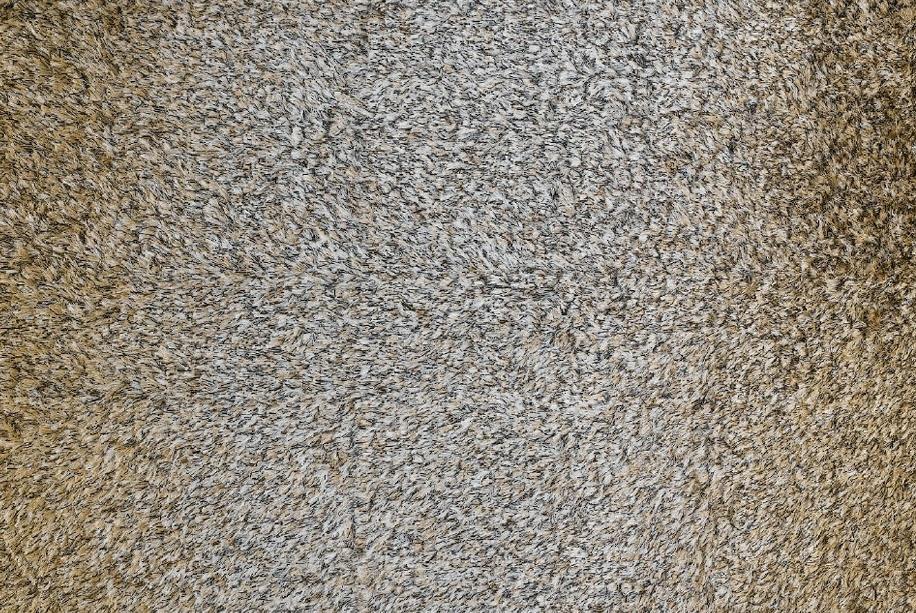 לקנות שטיחים לסלון