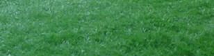 לקנות דשא סינטטי קיסר