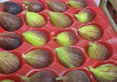 לקנות Figs