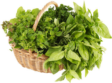 Fresh Herbs Israel