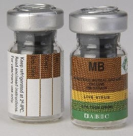 לקנות Lyophilized Infectious Bursal Disease M.B. strain, live vaccine in Vials
