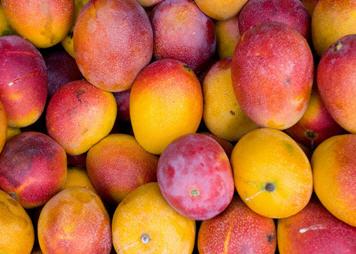 לקנות Mangos