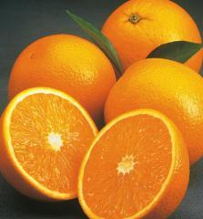 Fresh Orange - Valencia