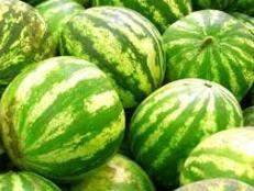 Fresh Watermelon from Israel