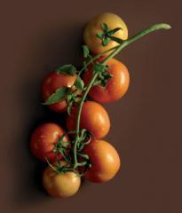 Organic Large Vine Tomato