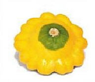 The beautiful small yellow squash 