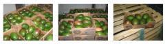 Mango Variety NOA