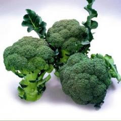 Broccoli `Marathon F1`