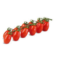 Cherry tomato seeds Rona