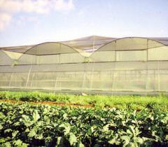 יריעות ורשתות לחקלאות, דבק
