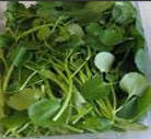 Fresh Water Cress