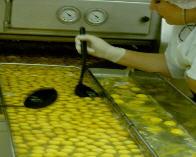 Protein liquid egg