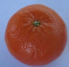 Citrus Or