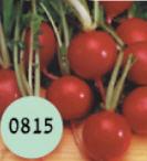 זרעי צנונית אורגניים