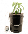 Hydroponic Systems for plants