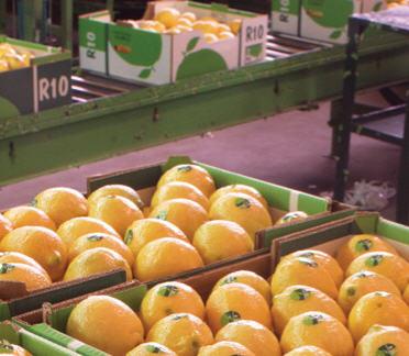 הזמנה ייבוש, בירור, מיון, אריזה והפרדה של פירות קיץ