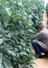חממות - פרויקטים גידול ירקות, פרחים ופירות