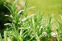 Fresh Herbs Israel. Flora Export S.G. Israel LTD