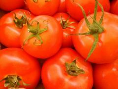 Fresh Vegetables Israel. Flora Export S.G. Israel